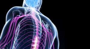 Sistema nervoso nel bodybuilding