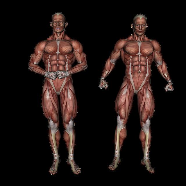 Ipertrofia e stimoli allenanti come mettere massa
