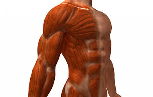 stretching bodybuilding