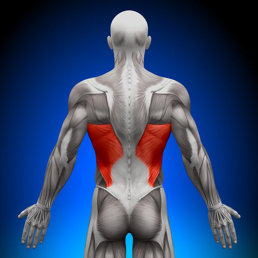Anatomia del gran dorsale - allenare i muscoli carenti