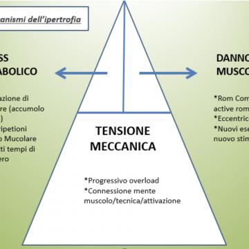 "FOCUS – PLAN&ACTION ""OBIETTIVO IPERTROFIA"": Q&A"